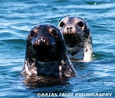 Chatham's Seals
